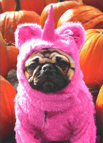 Pug in Pink Unicorn Costume (1 card/1 envelope) - Halloween Card - FRONT: No text  INSIDE: In the store, it looked a lot less PINK!  Happy Halloween