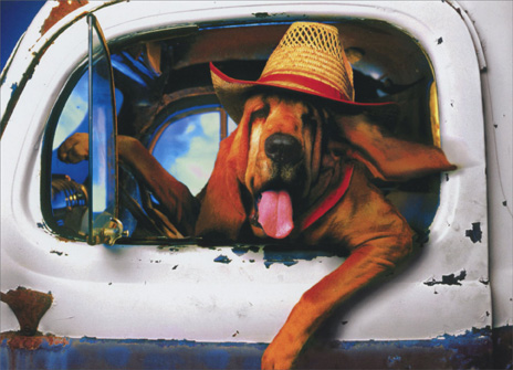 Hound Dog Driving (1 card/1 envelope) Funny Friendship Card - FRONT: No Text  INSIDE: Thought you might need a lift.