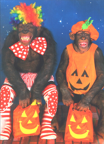 Chimps Trick or Treating (1 card/1 envelope) Monkey Halloween Card - FRONT: No text  INSIDE: Trust me, You don't want the trick option!  Happy Halloween