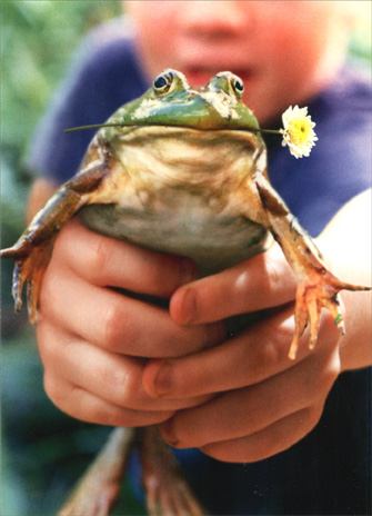 Frog with Flower in Kid's Hand (1 card/1 envelope) Mother's Day Card - FRONT: No Text  INSIDE: Motherhood..  it's not for the squeamish!  Happy Mother's Day