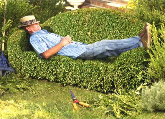 Man On Topiary Couch (1 card/1 envelope) Father's Day Card - FRONT: No Text  INSIDE: Sheer genius.  Happy Father's Day!