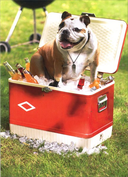 Dog On Cooler (1 card/1 envelope) Bulldog Father's Day Card - FRONT: No Text  INSIDE: There's no one cooler than you!  Happy Father's Day
