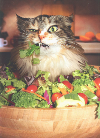 Cat Eats Salad (1 card/1 envelope) - Just For Fun Card - FRONT: No Text  INSIDE: I may have �gone green� but I'm still thinkin' chocolate!