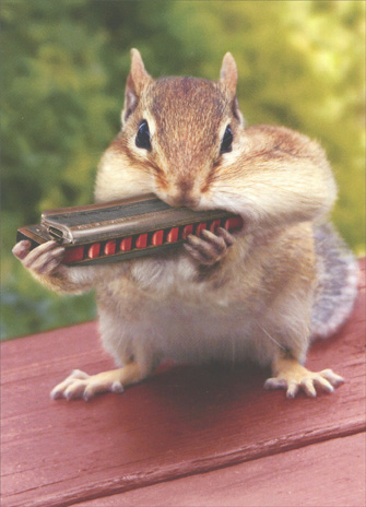 Chipmunk with Harmonica (1 card/1 envelope) Thank You Card - FRONT: No Text  INSIDE: A note of thanks!