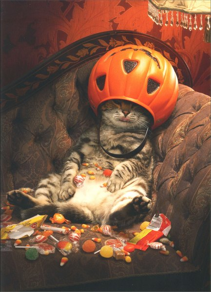 Cat Under Candy Bucket (1 card/1 envelope) Funny Halloween Card - FRONT: No Text  INSIDE: Don't think of it as over-indulgence, think of it as celebrating! Happy Halloween