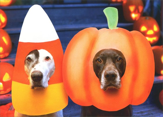 Two Dogs, Pumpkin and Candy Masks (1 card/1 envelope) Halloween Card - FRONT: No Text  INSIDE: The Things we do for treats! Happy Halloween