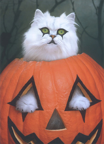 Goth Cat (1 card/1 envelope) Halloween Card - FRONT: No Text  INSIDE: Goth treats? Happy Halloween