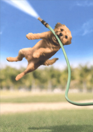Dog with Garden Hose (1 card/1 envelope) Avanti Encouragement Card - FRONT: No Text  INSIDE: Hang in there!
