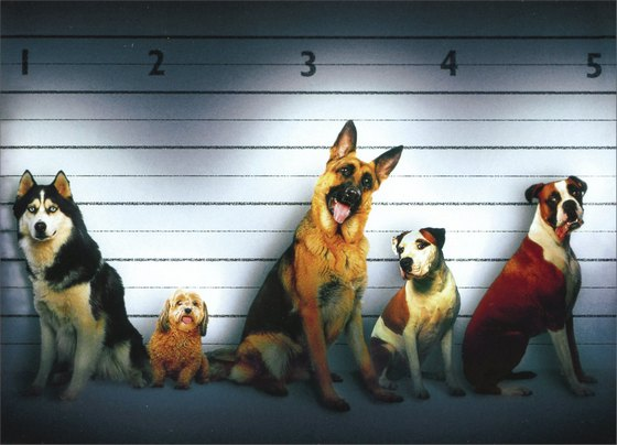 Dog Line Up (1 card/1 envelope) Funny German Shepherd, Boxer, & Husky Birthday Card - FRONT: No Text  INSIDE: Happy Birthday from all the usual suspects!