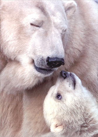 Polar Bear with Cub (1 card/1 envelope) Avanti Mother's Day Card - FRONT: No Text  INSIDE: We'll always be this close!.. with love on Mother's Day