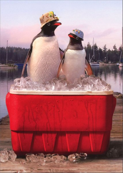 Penguins in Cooler (1 card/1 envelope) Avanti Father's Day Card - FRONT: No Text  INSIDE: Dad.. the older I get, the cooler you get! Happy Father's Day