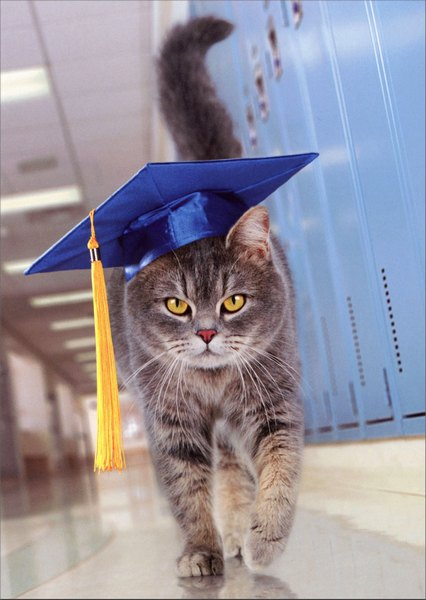 Cat with Graduation Cap (1 card/1 envelope) Avanti Graduation Card - FRONT: No Text  INSIDE: Look out world! Congratulations