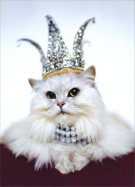 Princess Kitten (1 card/1 envelope) Birthday Card - FRONT: No Text  INSIDE: Everyday you sparkle, but today you rule! Happy Birthday