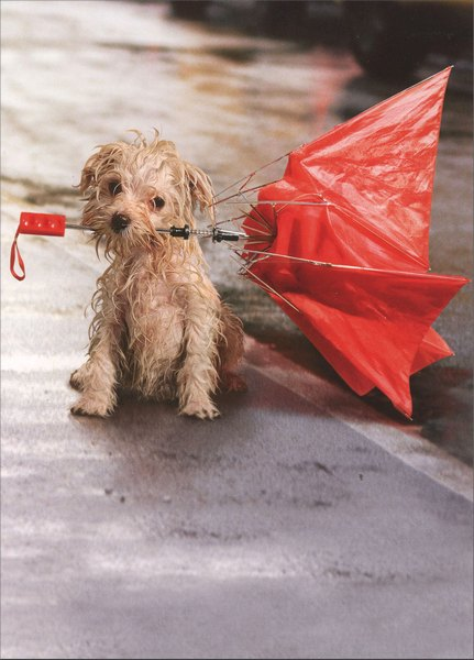 Dog In Rain with Umbrella (1 card/1 envelope) Avanti Encouragement Card - FRONT: No Text  INSIDE: If one more person tells me to �hang in there!�