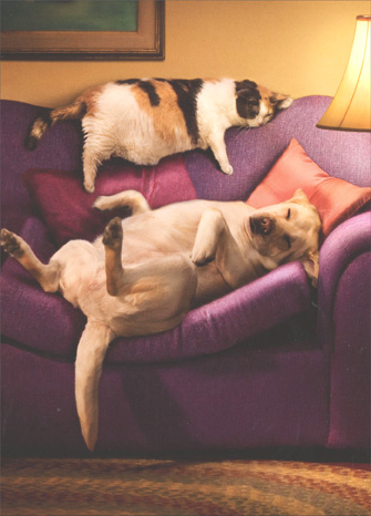 Dog/Cat On Couch (1 card/1 envelope) Avanti Funny Anniversary Card - FRONT: No Text  INSIDE: On the bright side.. You're still sleeping together! Happy Anniversary