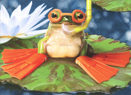 Frog With Flippers On Lily Pad (1 card/1 envelope) Avanti Press Funny Birthday Card - FRONT: No Text  INSIDE: Happy Flippin' Birthday!