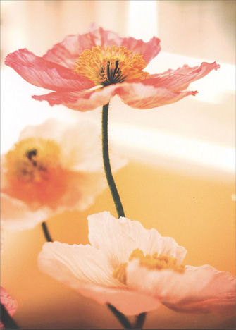 Three Pink Poppies (1 card/1 envelope) - Sympathy Card - FRONT: No Text  INSIDE: May loving memories lighten your heart..