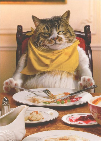 Fat Cat Asleep At Table (1 card/1 envelope) Avanti Press Funny Cat Thanksgiving Card - FRONT: No Text  INSIDE: That's why it's called stuffing! Happy Thanksgiving