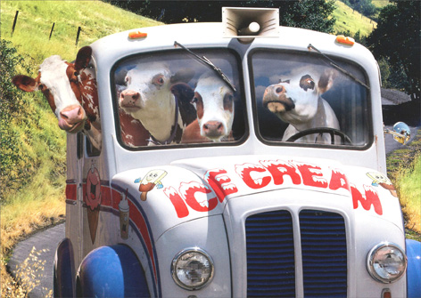 Cows In Ice Cream Truck (1 card/1 envelope) - Birthday Card - FRONT: Ice Cream  INSIDE: Party till they come home!  Happy Birthday