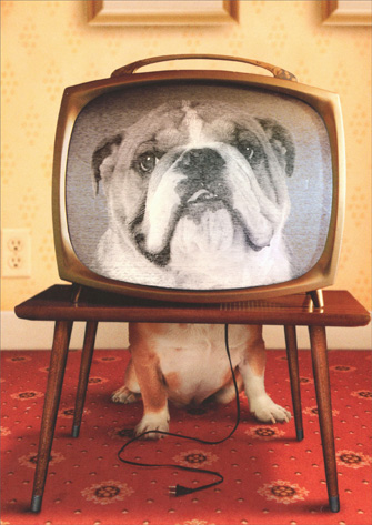 Dog In Tv Set (1 card/1 envelope) Avanti Bulldog Thank You Pet Sitting Card - FRONT: No Text  INSIDE: Thanks for watching my dog!