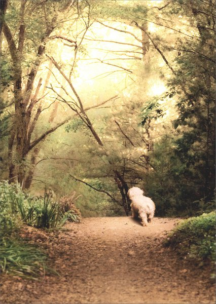 White Dog On Path (1 card/1 envelope) Avanti Pet Sympathy Card - FRONT: No Text  INSIDE: In life,  the best walks are always too brief.  So sorry for your loss