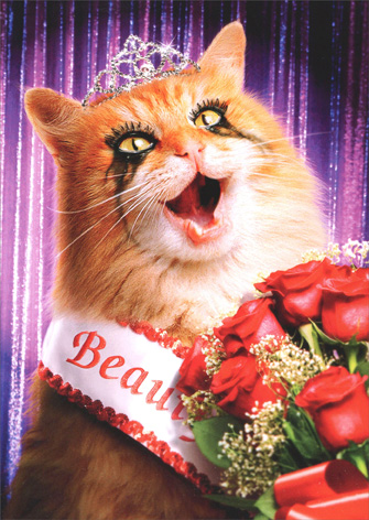 Cat Beauty Queen (1 card/1 envelope) Avanti Funny Birthday Card - FRONT: No Text  INSIDE: Happy Birthday.. and World Peace, of course!