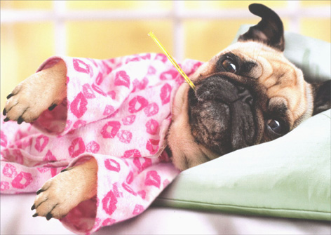 Pug In Pajamas (1 card/1 envelope) Avanti Dog Get Well Card - FRONT: No Text  INSIDE: Pugs and kisses! Get Well Soon
