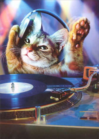 Cat DJ (1 card/1 envelope) Avanti Funny Birthday Card - FRONT: No Text  INSIDE: It's your Birthday! It's your Birthday! Get down!