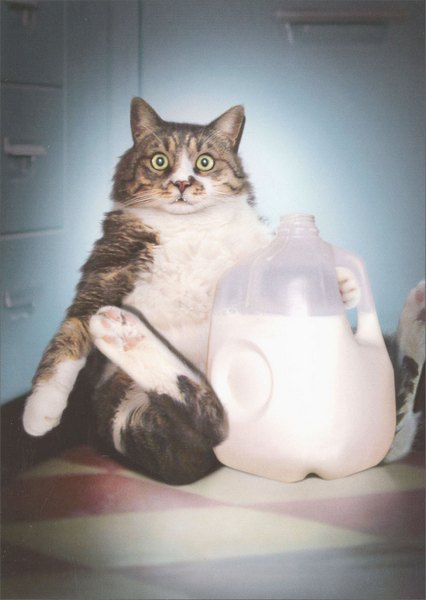 Cat With Milk Jug (1 card/1 envelope) - Birthday Card - FRONT: No Text  INSIDE: It's your day, go ahead and milk it! Happy Birthday