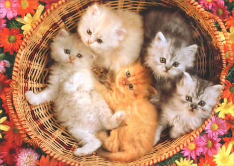 Basket Of Kittens (1 card/1 envelope) - Blank Card - FRONT: No Text  INSIDE: Blank Inside