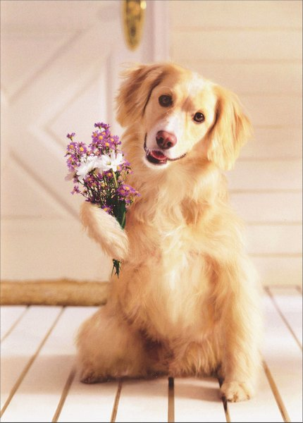 Dog Holding Bouquet of Flowers Avanti Golden Labrador Retriever Mother's Day Card - FRONT: No Text  INSIDE: I ruv you! Happy Mother's Day