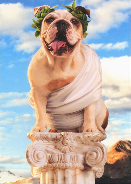 Toga Dog on Pedestal Avanti Bulldog Father's Day Card - FRONT: No Text  INSIDE: You Rule! Happy Father's Day