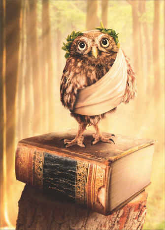 Toga Owl Funny Avanti Graduation Card - FRONT: No Text  INSIDE: Congratulations... oh wise one! Happy Graduation