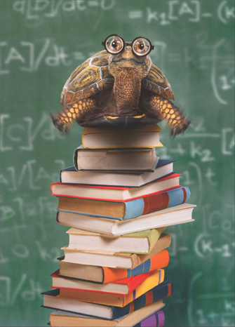 Turtle Atop Stack of Books - Graduation Card - FRONT: No Text  INSIDE: Here's to higher education! Happy Graduation