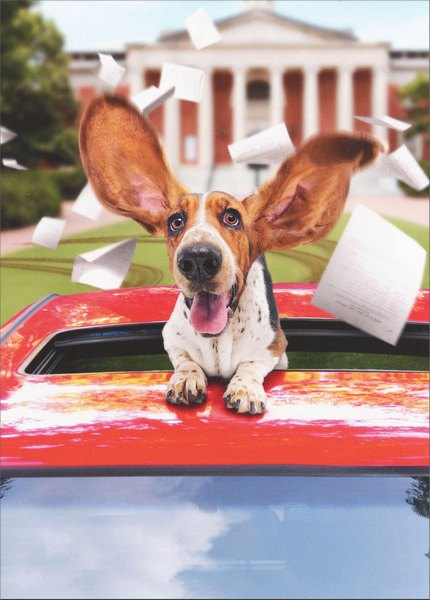 Basset Hound in Limo Avanti Dog Graduation Card - FRONT: No Text  INSIDE: There's a great big world, just waiting for you! Happy Graduation