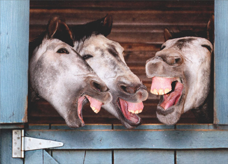 3 Donkeys Laughing (1 card/1 envelope) Avanti Funny Birthday Card - FRONT: No text  INSIDE: Getting older is no laughing matter ..unless it's happening to someone else! Happy Birthday