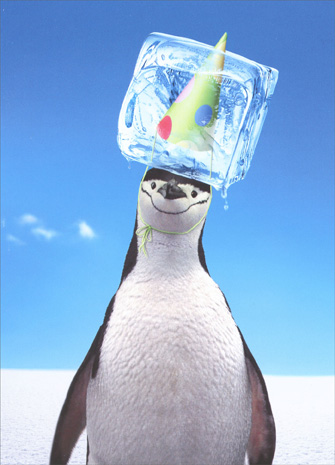 Penguin with Ice Cube (1 card/1 envelope) Avanti Funny Birthday Card - FRONT: No text  INSIDE: You're the coolest!  Happy Birthday