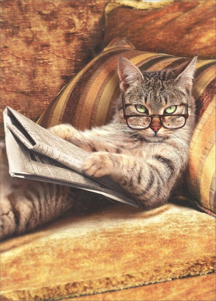 Cat Reading Newspaper (1 card/1 envelope) - Just For Fun Card - FRONT: No text  INSIDE: Life... it's just one interruption after another!