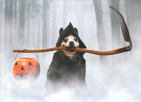 Grim Reaper Dog (1 card/1 envelope) Avanti Funny Halloween Card - FRONT: No text  INSIDE: Happy Halloween!  ..the end.