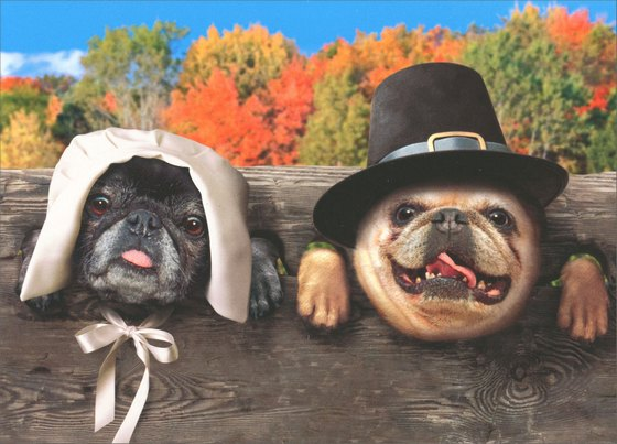 Dogs in Stocks (1 card/1 envelope) Avanti Funny Thanksgiving Card - FRONT: No text  INSIDE: It's all about quality time with loved ones!  Happy Thanksgiving
