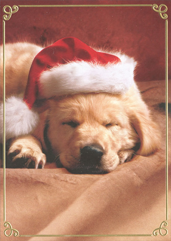 Puppy With Santa Hat Premium (1 card/1 envelope) - Christmas Card - FRONT: No Text  INSIDE: Have a Merry Little Christmas!