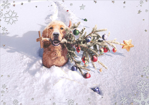 Dog W/Tree In Snow - Premium (1 card/1 envelope) Avanti Premium Christmas Card - FRONT: No Text  INSIDE: Special Delivery for a very Merry Christmas!
