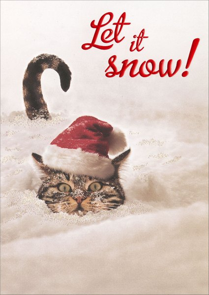 Cat In Snow - Premium (1 card/1 envelope) Avanti Premium Christmas Card - FRONT: Let it snow!  INSIDE: Let it snow! Let it snow!  Merry Christmas