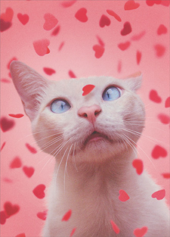 Cat With Heart Confetti (1 card/1 envelope) Avanti Funny Valentine's Day Card  INSIDE: I love you this many! Happy Valentine's Day