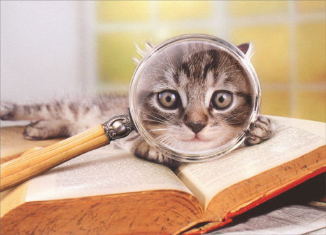 Cat With Magnifying Glass (1 card/1 envelope) Avanti Funny Graduation Card  INSIDE: Your future looks amazing! Congratulations