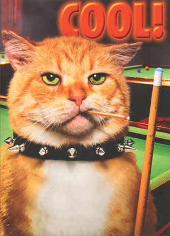 Pool Cat (1 card/1 envelope) Avanti Stand Out Pop Up Birthday Card - FRONT: Cool!  INSIDE: You call the shots! Happy Birthday