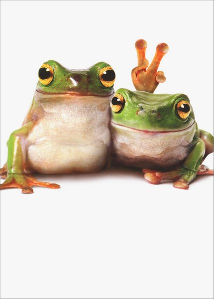 Frog Friends/Fingers Behind Heads (1 card/1 envelope) Avanti Funny Birthday Card  INSIDE: Unlike you… this never gets old! Happy Birthday