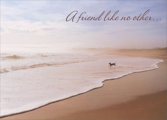 Dog Running On Beach (1 card/1 envelope) Avanti Pet Sympathy Card - FRONT: A friend like no other�  INSIDE: So sorry for your loss .