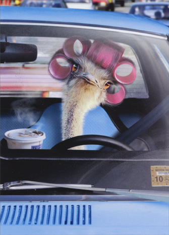 Ostrich Driving Car (1 card/1 envelope) Avanti Funny Belated Birthday Card  INSIDE: Fashionably late again! Happy Belated Birthday