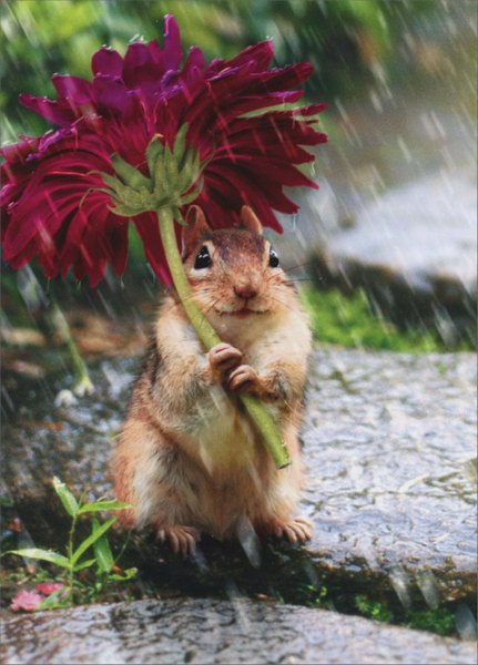 Chipmunk With Flower As Umbrella (1 card/1 envelope) Avanti Get Well Card  INSIDE: Sorry you're under the weather. Feel better soon!